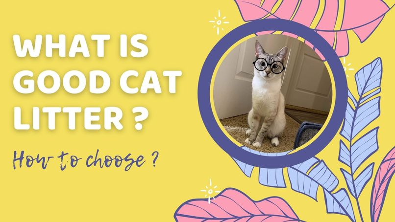 What is good cat litter