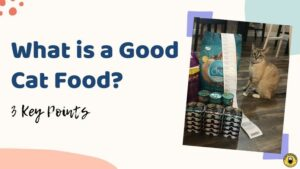 What is a Good Cat Food